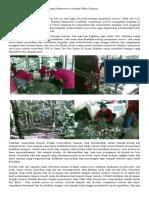 Pembuatan Kompos Di Hutan Malabar Malang #2