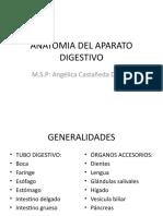 anatomia-del-aparato-digestivo