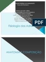 Fisiologia das Adrenais