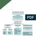 Mapa conceptual recombinacion del ADN