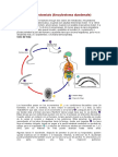 ciclo de vida nematoda