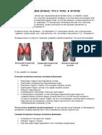 Anatomia Yagodits Popy Chto k Chemu i Pochemu