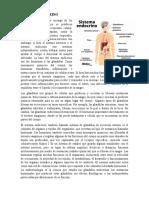 SISTEMA ENDOCRIN2