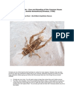 Culturing Crickets