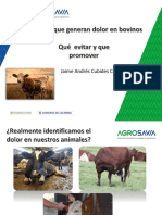 Prácticas que generan dolor en bovinos - Jaime Cubides