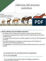 06 Evidencias Del Proceso Evolutivo