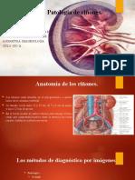 Patología de riñones