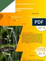 Tarea 4 - Clasificación morfológica de las plantas