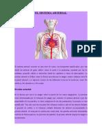 GRUPO 4-Funciones del Sistema Arterial,Venoso, Linfatico, Hemodinamia, Presión, Flujo y Resistencia - WORD.