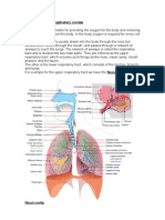 Structure of the respiratory system 2