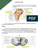 Anatomia do Cerebelo