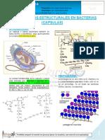 18-B-25!06!19 Carbohidratos Estructurales en Las Bacterias