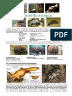 l-ornithorynque