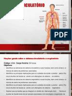 6566 Sistema Circulatorio Convertido