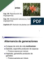 Caps Plantas resumidosn español