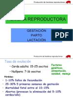 Reproductoras2