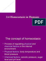 homeostasis in humans