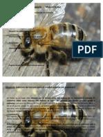 Formación e instalación del apiario