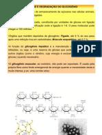 sintese e degradação do glicogênio e CK