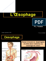cours_oesophage