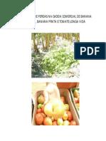 AVALIAÇÃO DE PERDAS NA CADEIA COMERCIAL DE BANANA NANICA,