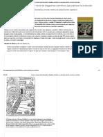 Árboles de la vida_ una historia visual de diagramas científicos que explican la evolución_ selecciones cerebrales