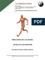 10 Descripción Muscular Miembro Inferior - CAET 2013