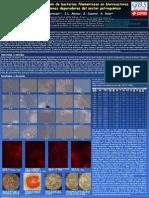 2008 - Bacterias filamentosas en biorreactores estaciones depuradoras del sector petroquímico