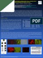 2010 - Cuantificación de bacterias nitrificantes con la técnica FISH y análisis de imagen en fangos activos