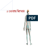 1 Sistema Nervoso Anatomia PDF