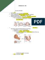 SEMANA 04-- Resumen de vision Embrio