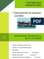 explotacion de ganado Lechero