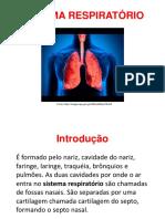 Anatomia Sistema Respiratório (1)