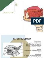 Musculos de La Lengua