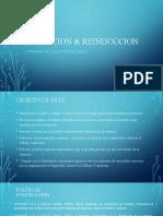 Induccion & Reinduccion Cvp