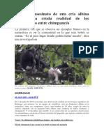 Infanticidios Entre Chimpancés, Bases Para Enteender El Racismo