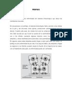 PENFIGO -penfigoide ampular