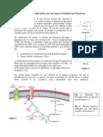 Hidrolización de Triglicéridos por una Lipasa estimulada por Hormonas