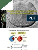metabolismo-de-proteinas-y-aminoacidos
