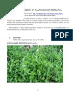 Plante Romania