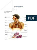 Anatomia Si Fiziologia Sistemului Respirator