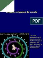 Filosofia-neurosci4Svil