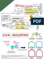 ÁCIDOS NUCLEICOS-NUCLEÓTIDO-MAPA-CONCEPTUAL-AA.-convertido