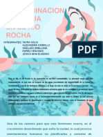 Rio Rocha