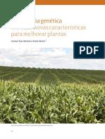 VA_13_Melhoramento_Genetico-artigo2