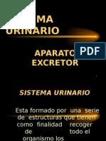 12 Sistema Urinario
