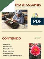 El-viverismo-en-Colombia-jun-2019