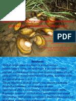 Определение Ионов Металлов в Раковинах Пресноводных Моллюсков. Презентация