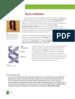 3 - Celula y Herencia