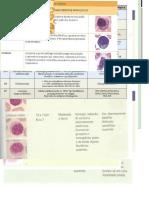 hematologia - apostila
